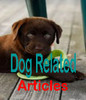 Thumbnail 50 Dog Related Articles